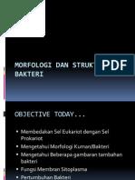 Morfologi Dan Struktur Bakteri