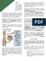 El núcleo y la división celular