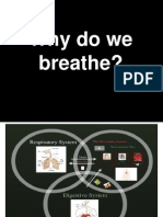 Respiration and the Mechanics of Breathing