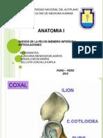 Miembrio Inferior