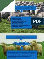 ovinos enfermedades