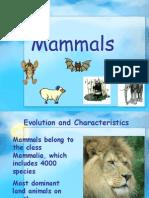 98493336-Mammals