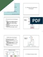 Cap 22 Sintesis de Amino Acidos Nucleotidos 2010 (2)