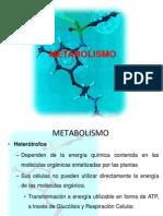 metabolismoparte1-100512010619-phpapp01[1]