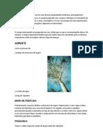 O angico  é uma árvore com diversas propriedades medicinais