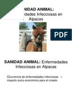 Enfermedades Infecciosas y Parasitarias en Alpacas 09