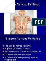 Aula de Sistema Nervoso Periferico