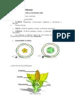 Morfologia Floral