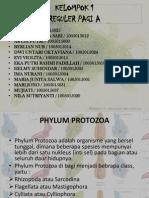 Protista Rhizopoda