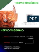 Trigemino Trigeminal Nerve