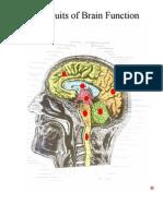 4 Circuits of Brain Function