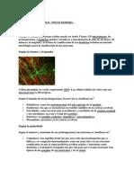 Tarea de Redes Neuronales