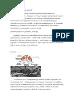 Embriologia Del Aparato Urinario