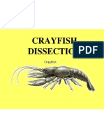 Cray Fish Dissection!!!