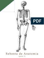 Sebenta de Anatomia - Parte 3