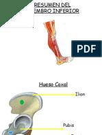 Anatoma Del Miembro Inferior