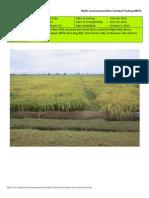 2012WS MET 1-Irrigated - Week 17 (October) Nueva Ecija