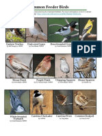 Common Feeder Birds - Maryland Department of Natural Resources
