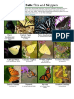 Common Butterflies and Skippers - Maryland Department of Natural Resources