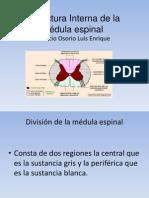 Estructura Interna de la médula espinal