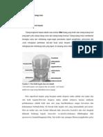 28579070 Anatomi Dan Fisiologi Otak