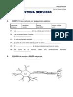 Sistema Nervioso 2012