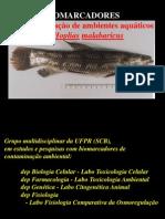 Biomarkers Hm 2005