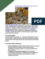 Artikel Ayam Boiler