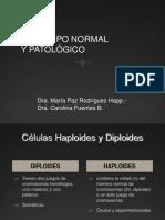 cariotiponormalypatolgico-101102195057-phpapp01