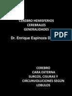 Cerebro Morfologia Externa
