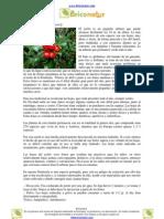 Usos medicinales del Acebo (Ilex aquifolium)