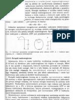 Biochemia Roślin Jerzy kączkowski