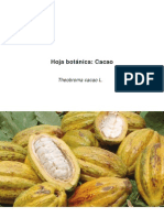 Hoja Bot Nica Cacao 2012
