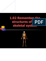 1 02 remember the structures of the skeletal system