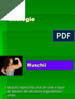 Curs Muschi 2012