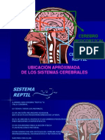 Cerebro Triuno Para Educadores