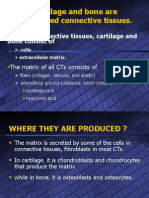 Cartilage and Bone Are Specialized Connective Tissues