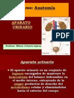 aparato_urinario1 (1)