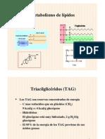 B-Oxidacion y Sintesis de Acidos Grasos