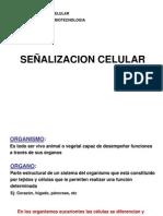 1o Clase Senalizacion Cel 21-9-09