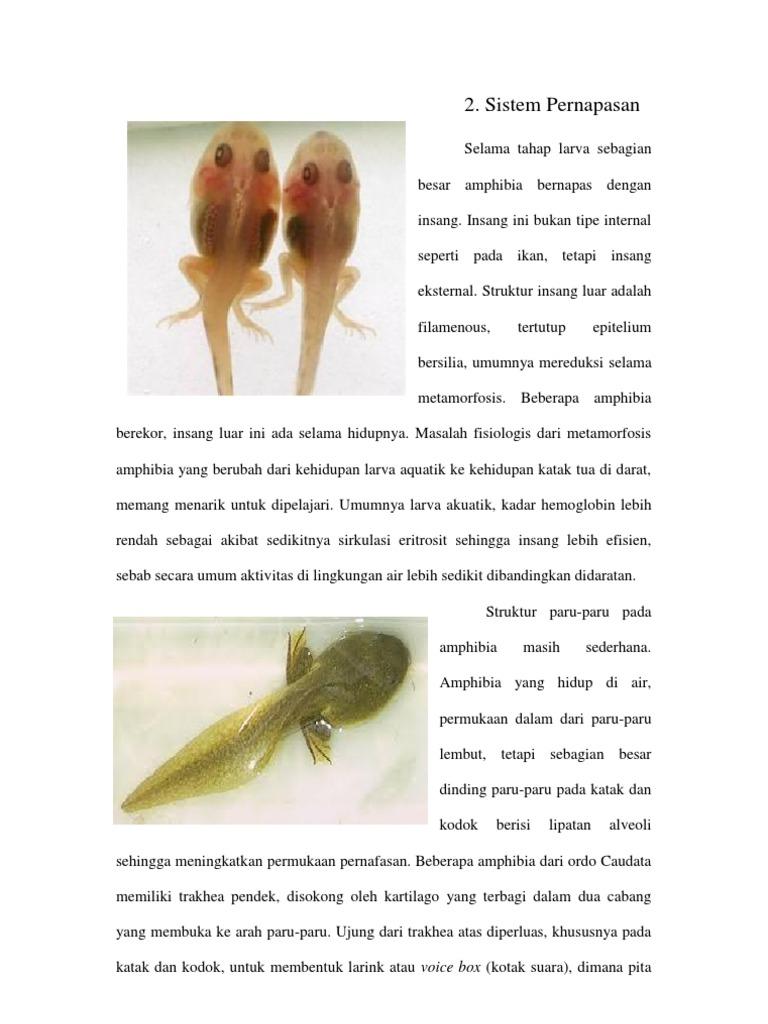 640+ Gambar Organ Pernapasan Hewan Amfibi Gratis Terbaik