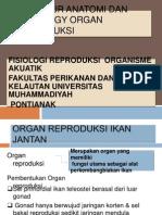 Anatomi Dan Histologi Organ Reproduksi