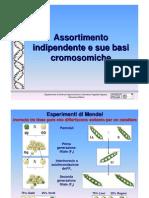 11 Assortimento Indipendente e Sue Basi Cromosomiche genetica agraria uniss