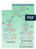 12b Ricombinazione Geni Associati genetica agraria uniss