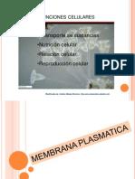 Organización  y funciones de la célula.