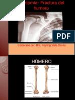Anatomia y Fractura Humero