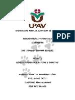 Clinica Veterinaria Patitas y Garritas