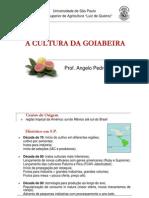 A Cultura Da Goiabeira