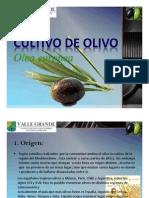 Presentacion de Olivo