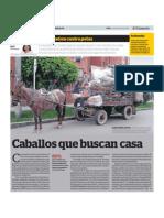CABALLOS BUSCAN CASA